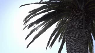 Palm tree with ocean mist blowing by in sunshine 4k
