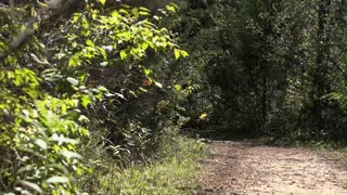 Quiet empty trail in woods establishing shot 4k
