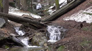 Quiet stream flowing through Sequoia National Forest 4k