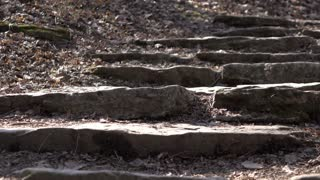 Rock stairs walkway on forest hike path 4k