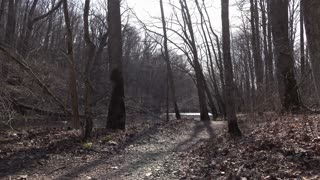 Shadows created by bare trees in forest on path wide angle view 4k