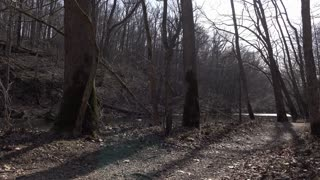 Shadows stretching across hiking path through woods 4k