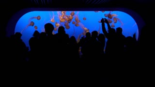 Silhouette of People in front of Jelly Fish exhibit