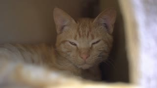 Sleepy cat relaxing in shade