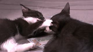 Two kittens fighting over money slow motion