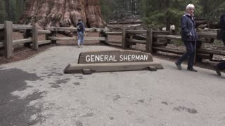 Visitors taking pictures at General Sherman tree in Sequoia woods 4k