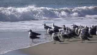 Waves crashing into ocean shore with Seagulls watching slow motion