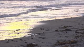Yellow sun reflection in sunset ocean sand 4k
