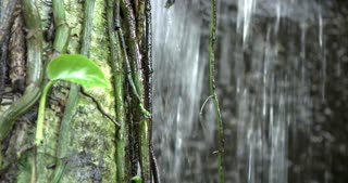 Vines growing on tree dangling in waterfall 4k