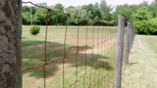 Walking down farm fence line