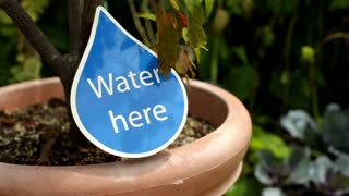 Water Here Sign on Plant