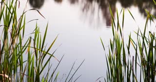 Water reflection in pond behind grass 4k