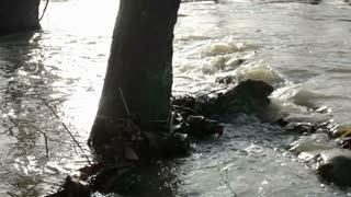 Water Surrounding Tree