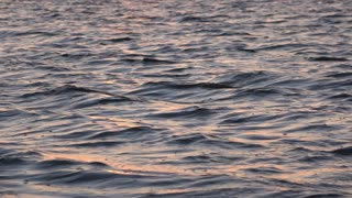 Waves of ocean with sunset lighting reflecting 4k