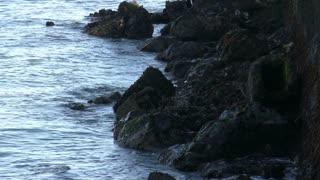 Waves Splashing on Black Rocks