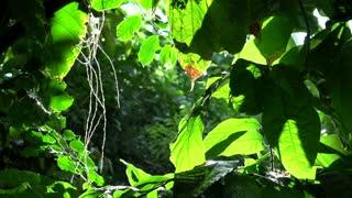 Wild butterflies in nature