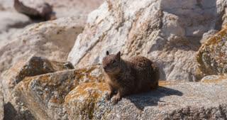 Wild squirrel runs off of rock 4k