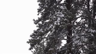 Winter weather with snowfall on trees 4k