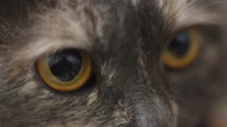 Close up of eyes cat