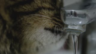 Cute cat drinking water from the tap