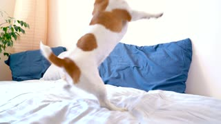Cute dog playing on the bed