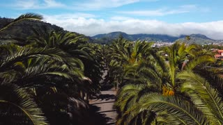 Flight along the palm grove. View from the height on townscape San Cristobal De La Laguna, Tenerife, Canary Islands, Spain