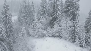 Flight over snowstorm in a snowy mountain coniferous forest, uncomfortable unfriendly winter weather