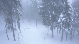 Flight over snowstorm in a snowy mountain coniferous forest, uncomfortable unfriendly winter weather.