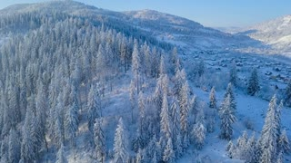 Flight over snowy mountain coniferous forest. Clear sunny frosty weather