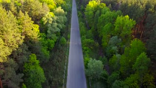 Road through the forest - aerial survey
