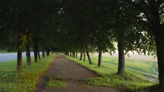 Silent walkway with trees for walking
