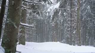 Snowstorm in a snowy mountain coniferous forest, uncomfortable unfriendly winter weather