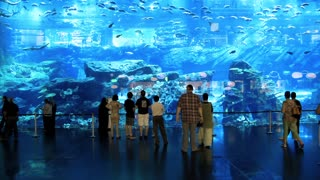 The Mall's Dubai Aquarium and Discovery Centre developed and operated by Oceanis Australia Group officially earned the Guinness World Record for the world's Largest Acrylic Panel
