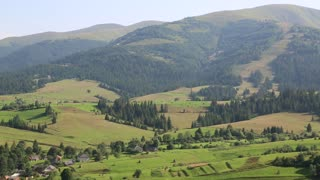 Beautiful green hills and coniferous forest in Carpathian Mountains in Ukraine