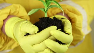Woman in yellow protective suit with yellow gloves holding in hands soil and a green young plant