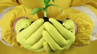 Woman in yellow protective suit with yellow gloves holds in hands soil and green young plant