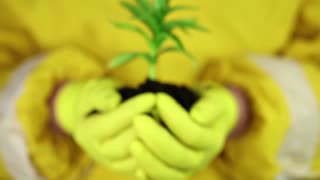 Man in yellow protective suit holds in hands soil and green young plant. A human in yellow protective suit with yellow gloves holds in hands soil and a young green plant