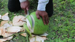A man peels a big green coconut