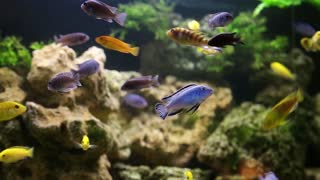 Aquarium fishes and water plants