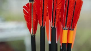 Arrows for archery. Red arrows in quiver - case for arrows
