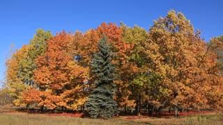 Autumnal many-coloured trees
