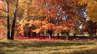 Autumnal yellow and red trees