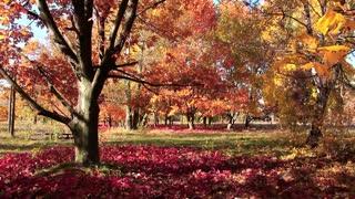 Beautiful autumn. Amazing beautiful trees