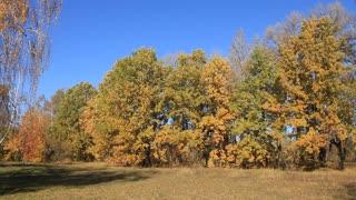 Beautiful autumn. Autumnal many-coloured trees