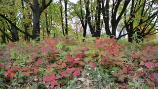 Beautiful autumn in deciduous forest
