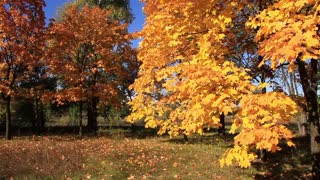 Beautiful autumn. Red and yellow trees