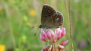 Beautiful butterfly on clover flower