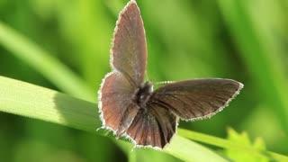 Beautiful butterfly on green leaf