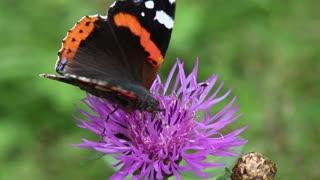 Beautiful butterfly on the purple flower
