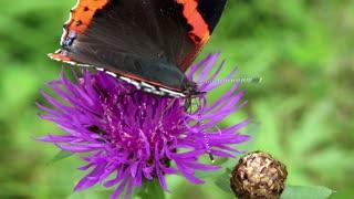 Beautiful butterfly sit on purple flower